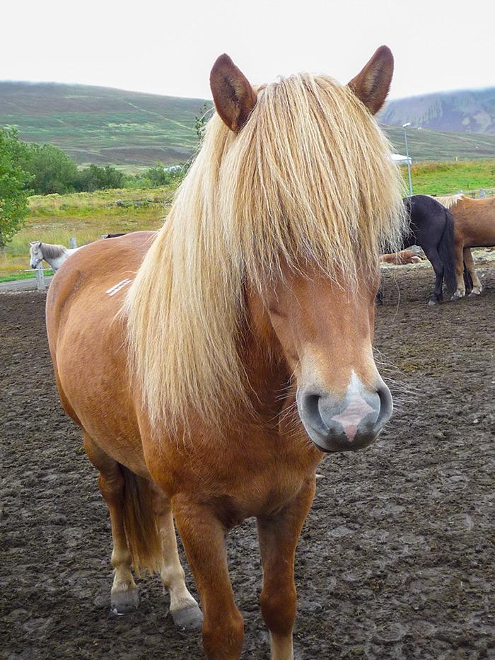 Kocewiak-Islandia-26