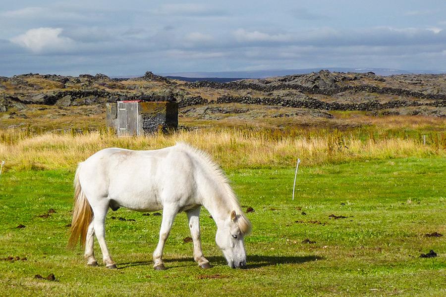 Kocewiak-Islandia-27