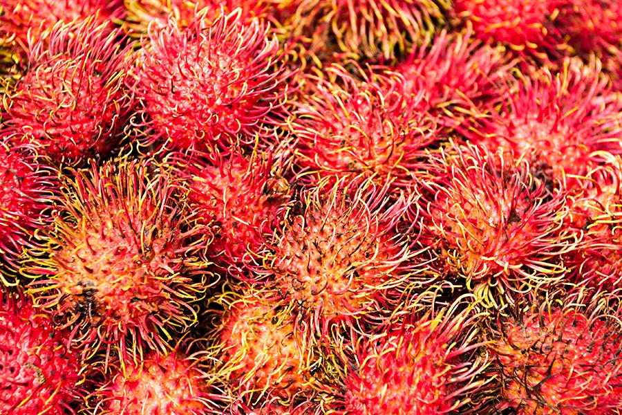 Pod kolczastą powłoką rambutana kryje się soczysty owoc, który orzeźwi nawet w najbardziej parny dzień.