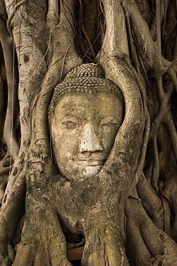 Głowa Buddy skryta w korzeniach do dzisiaj stanowi przedmiot kultu.