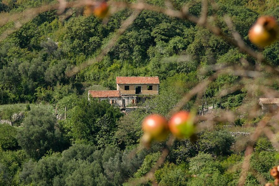 Dziki granat powoli dojrzewa w słońcu a wiatr gości w opuszczonych domostwach.