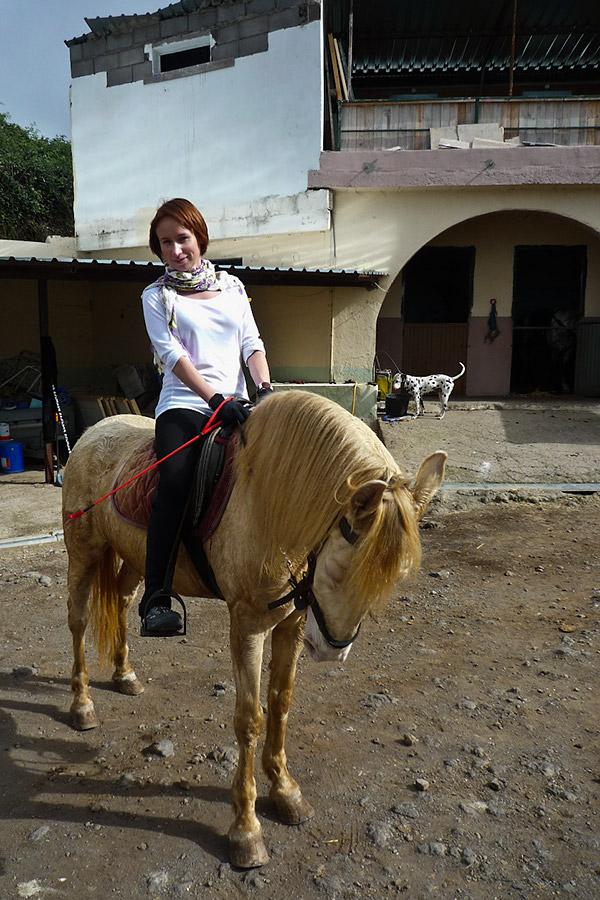 Posłuszny koń czeka na najmniejsze drgnięcie wodzy.
