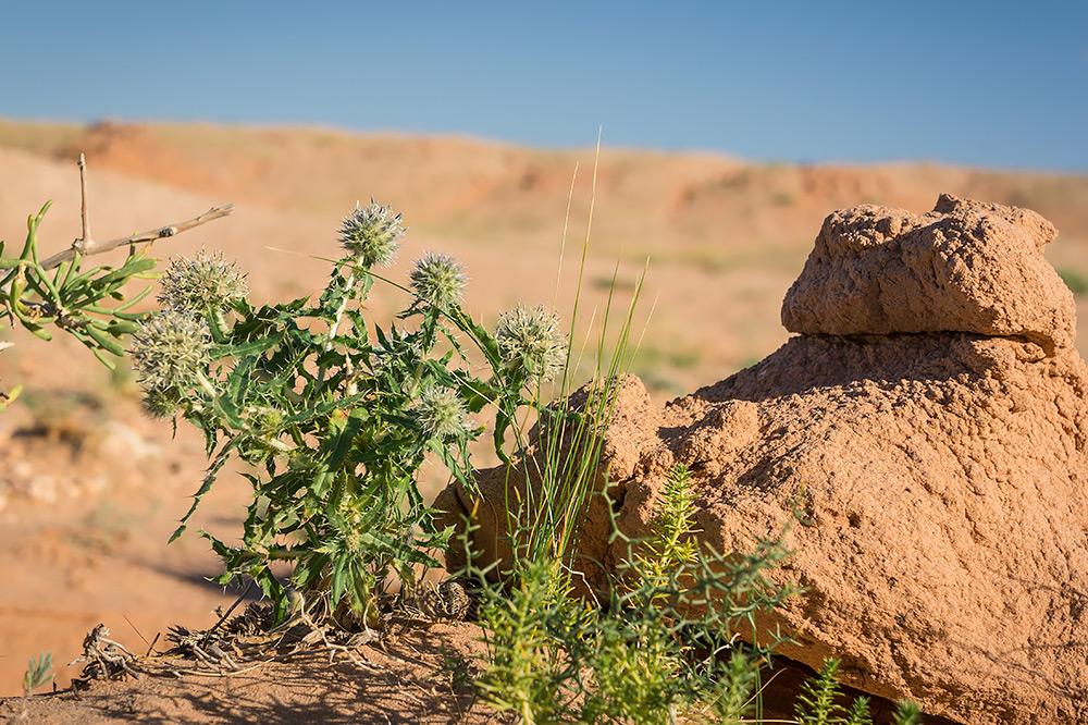 Nawet na pustyni można spotkać różnorakie formy życia.