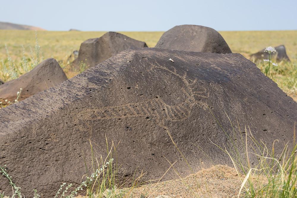 Zwierzęta już od pradawnych czasów nierozerwalnie towarzyszyły ludziom w życiu na pustyni.