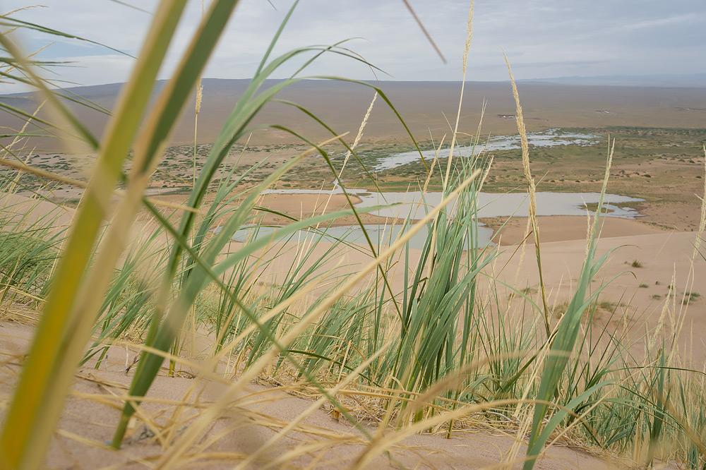 Najbardziej wytrzymała roślinność kserofityczna nie poddaje się wymagającym warunkom panującym na samym środku pustyni. Ta wydma jest wręcz idealnym miejscem na wegetację.