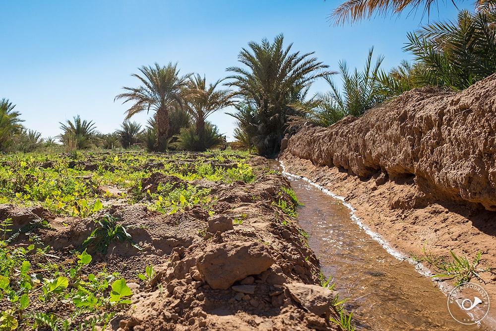 Kartka z Podróży: Projekt Maroko 2015 (168)