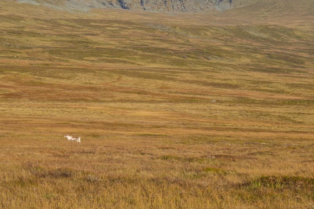 trekking-sylan-norwegia-kartka-z-podrozy-25