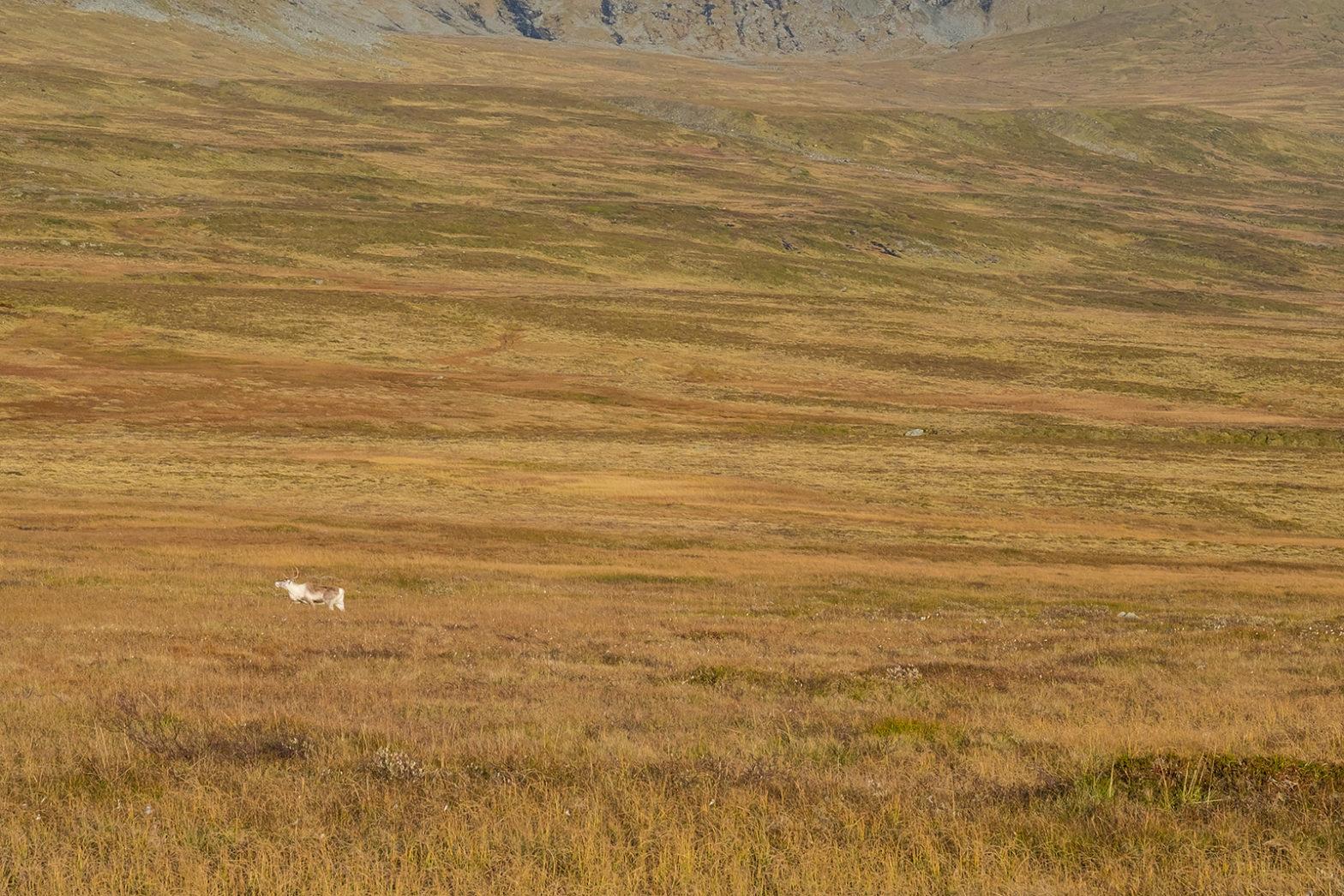 Trekking-Sylan-Norwegia-Kartka-z-podrozy (25)