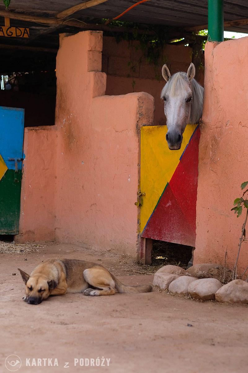 Lisowczycy-Maroko-w-Siodle-07